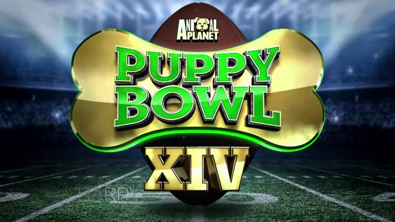 "MONDAY Puppy Bowl Pups Ref Dan Shachner PLUS Bizarre Foods"" Host Andrew Zimmern"