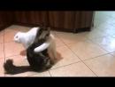 Белый ангел танцует танго. Фрагмент видео с канала BobCat TB.
