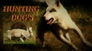 Hog and Bear hunting with dogs Охота на кабана и медведя с лайками HUNT DC hunting dogs channel