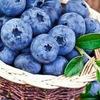 blueberry_brest