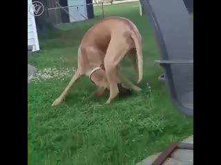 Теперь понятно, почему знак @ назвали собака
