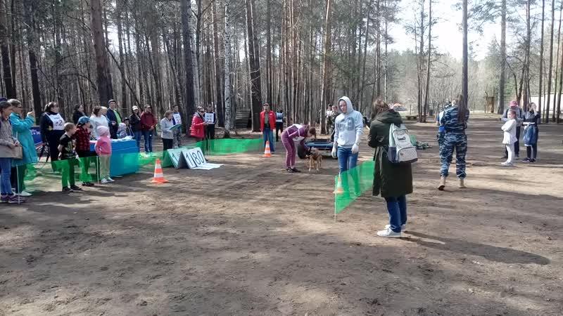 Чемпионат России по Вейтпуллингу (WP)