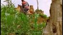 BBC Жизнь птиц 10 Пределы выносливости Документальный 1998