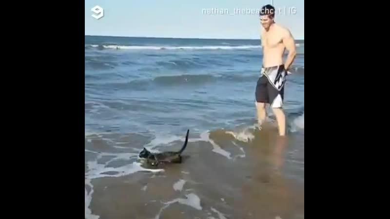 Un chat qui aime nager.