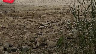 Глина с федеральной трассы уничтожает урожай в СНТ «Ромашка-Иня»
