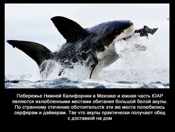 Valteya - Интересные факты о акулах / Хищники морей.(Видео. Фото) - Страница 2 M9Ac8OEyFXk