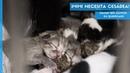 Кесарево сечение у кошки