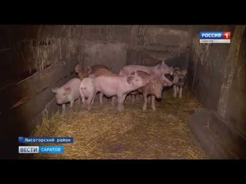 За осень две вспышки африканской чумы свиней: кто в зоне риска?