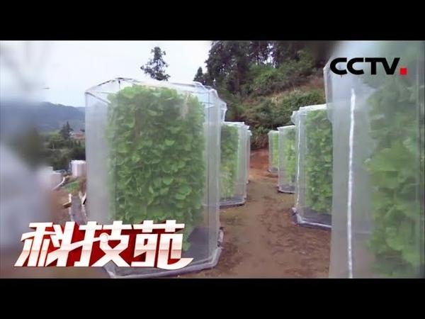 《科技苑》 20171218 蔬菜摞着长 亩产增三倍 | CCTV农业