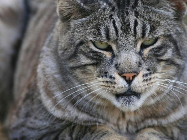 Как мужают коты У нас живёт кошак. Точнее не у нас, а у мамы, типа тёщи. Тёща женщина очень аккуратная, любит в доме порядок и чистоту, поэтому сразу же отрезала коту яйца. И назвала Тузиком.