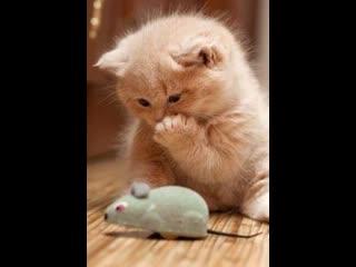 Самые милые котята Сборник видео про котят НУ ОЧЕНЬ МИЛО