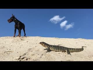 Варя и Гелик в песках