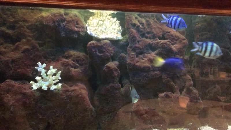 Sirena - Fish'S restaurant