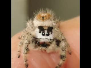 Мой любимый паук!