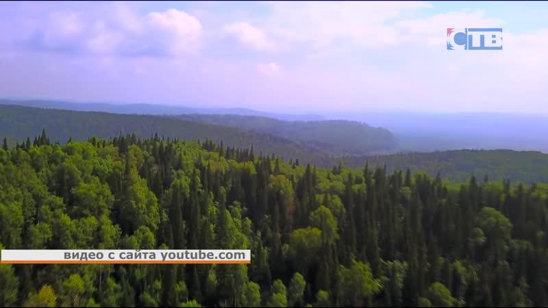 02 08 2019 S7 Airlines опять Сибирь Акция по сбору средств с продажи билетов на посадку 1 миллиона деревьев