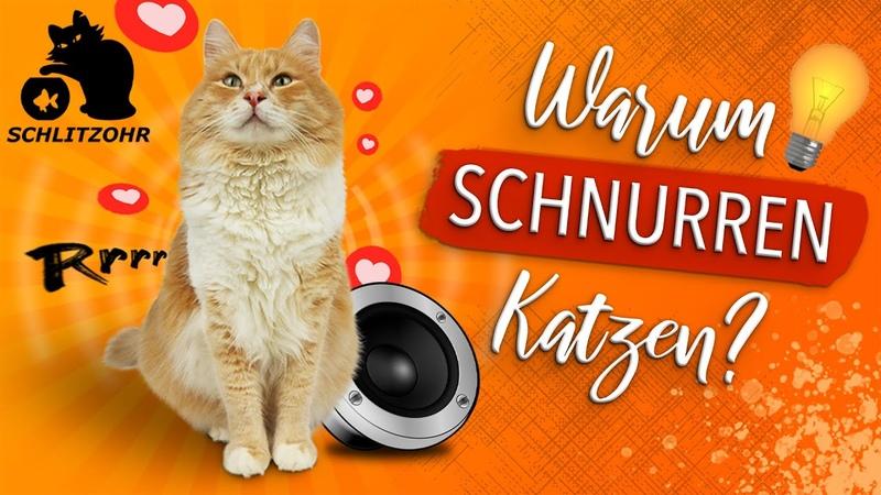 🔥Wie und warum schnurren Katzen UNGLAUBLICHER NEBENEFFEKT Katze schnurrt nicht, was tun