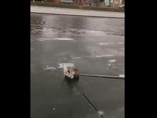В Астрахани прохожие спасли кота