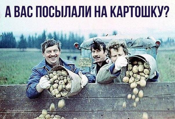 Научные сотрудники на картошке, 1986 год... Было дело