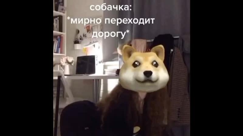 Собака Любарская 🦮