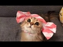 Funny cat Смешные КОТИКИ 11 11 2019 It's Possible to Watch Forever それは永遠に見ることが可能はい