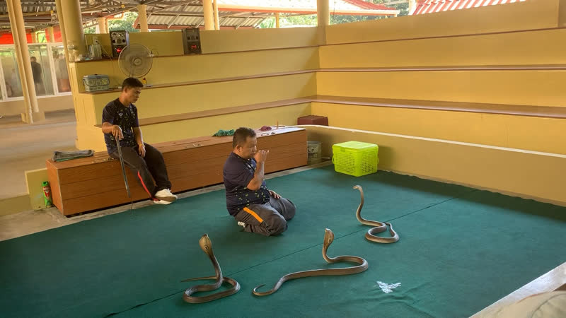 Шоу змеи Тайланд