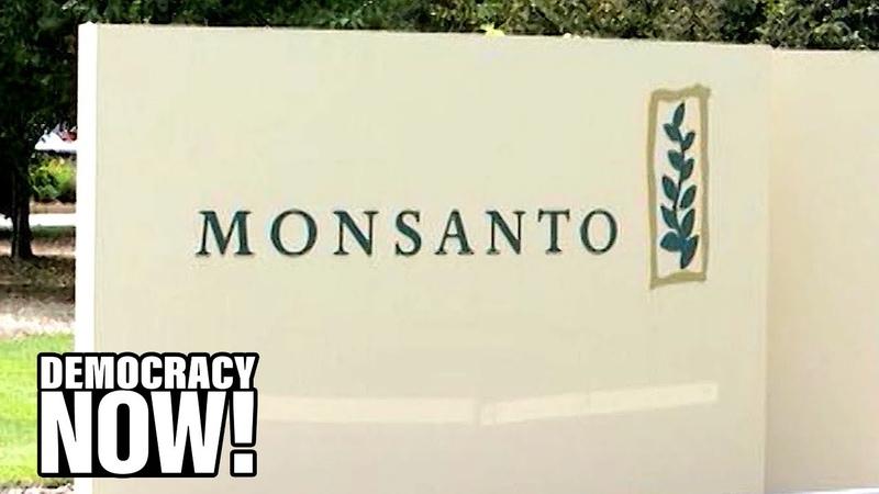 Documents Reveal Monsanto Surveilled Journalists, Activists Even Musician Neil Young