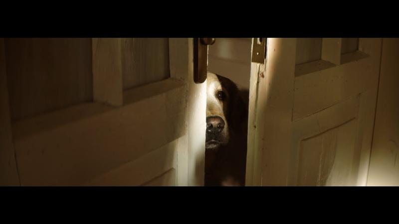 2018 Heartbreaking Pet Campaign - 30 Millions dAmis