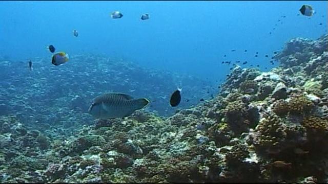 Под водой с... • Природа Палау