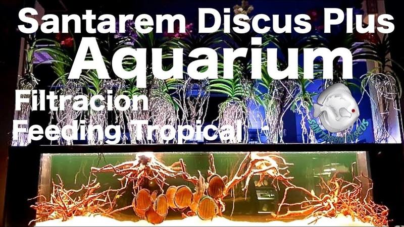 Santarem Discus Plus Aquarium 2500x700x600 - Filtration , Feeding in www.santaremdiscusplus.com