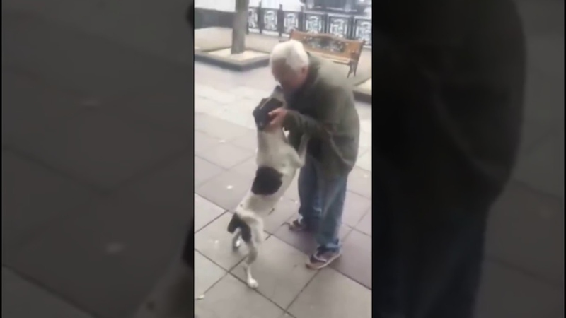 Man found his dog after 3 years ქუჩაში 3 წლის წინ დაკარგული ძაღლი იპოვა ! ემოცია !