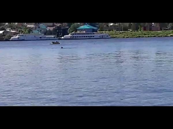 Жители Кимр сняли на видео момент гибели перевернувшихся на гидроцикле мальчика и мужчину