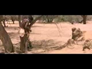 О людях и бабуинах..