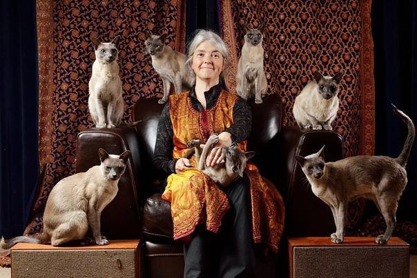 КОШАТНИЦА - Гляди, гляди, Семёновна, Настасья с пятого этажа опять приблудного котёнка к себе поволокла, - толкнув в бок локтём свою собеседницу, шёпотом изрекла сидящая на лавочке дородная
