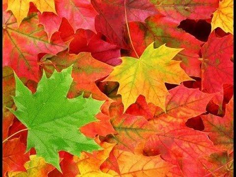 Осень музыка Сергея Чекалина Music Sergey CHEKALIN. Autumn. Beautiful russian music. 美しいロシアの音楽
