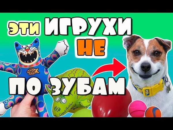 У Джека новые игрушки Игрушки для собак вандалов Они не по зубам даже джек рассел терьеру