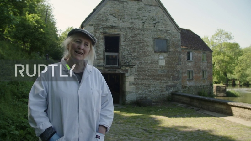 Thousand year old mill back in action in Dorset to supply flour amid shortages due to coronavirus