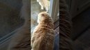 Get Off My Porch Irish House Cat Lectures Stray Through Glass Door