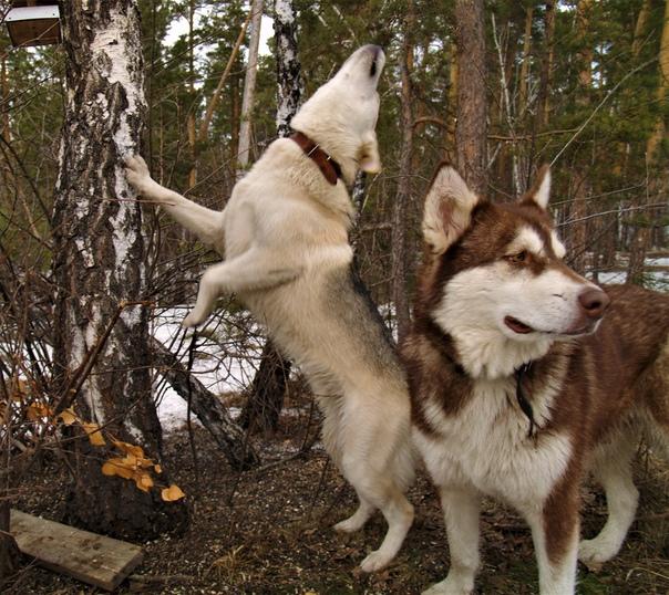 Ольга Благих: Арагорн проверяет кормушки. Лилу стоит на страже.