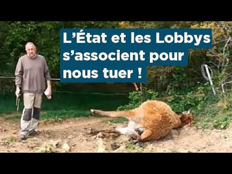 SOS L'Etat et les Lobbys meurtriers Danger CEM QUESTIONS CI DESSOUS APPEL À RÉPONSES merci