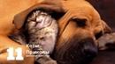 Приколы про кошек и собак видео смотреть 2020