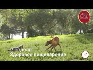 Purina_one_dog_15_v10
