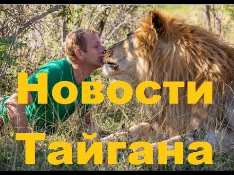 Новости Тайгана 31 03 20