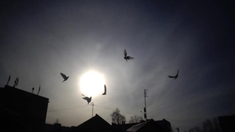 иметь животных во дворе это счастье особенно голубей