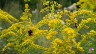 Красивая Природа и Нежные Пейзажи | Сверчки и Звук Ветра, Шелест Травы | 10 часов Релакса, и Сна