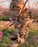 котэ мачо-романтик весну встречает