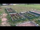 На даче в начале октября. Сажаем яблоню Пионерку, виноград Левокумский и малину 2 сорта.