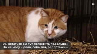 Кот Мостик побывал в гостях у символа 2021 года// РИА Новости Крым