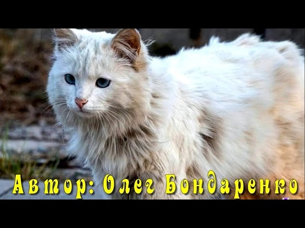 Бабушка миллионерша сдружилась с одной худой драной и грязной кошкой Но однажды кошка исчезла…
