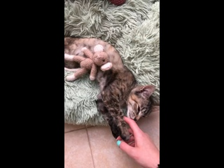 "Video by Проект помощи ""My Animal"""