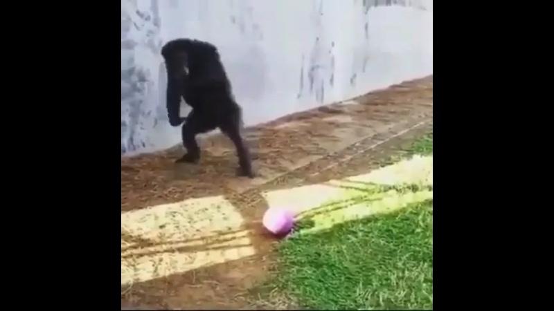Обезьяна с мячом